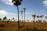Palm trees ... in eastern ... ok, ok