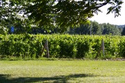And vines