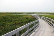 Boardwalk over dune landscape