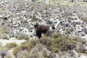 Vicuna/Llama/Alpaca
