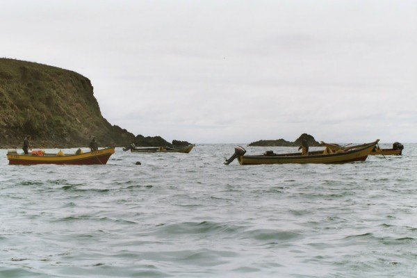 Boats moored by the pinguineria